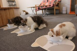 食事をしている3匹の猫